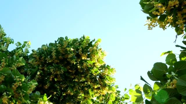 migration of monarch butterflies in the summer forest. - farfalla ramo video stock e b–roll