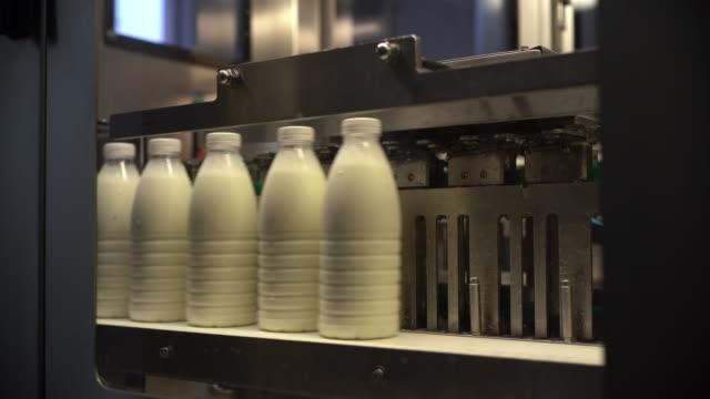 milk factory - lattaio video stock e b–roll