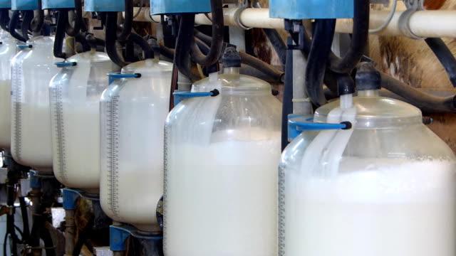 vídeos de stock e filmes b-roll de leite em frascos na quinta de laticínios - ordenhar