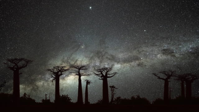 Milky Way at Avenue of the Baobabs Milky Way at Avenue of the Baobabs makgadikgadi pans national park stock videos & royalty-free footage