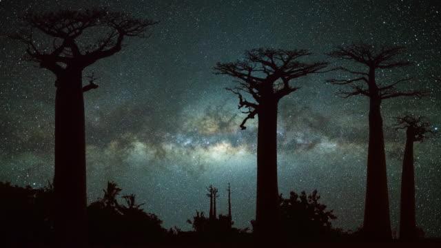 milchstraße am allee der baobabs - affenbrotbaum stock-videos und b-roll-filmmaterial