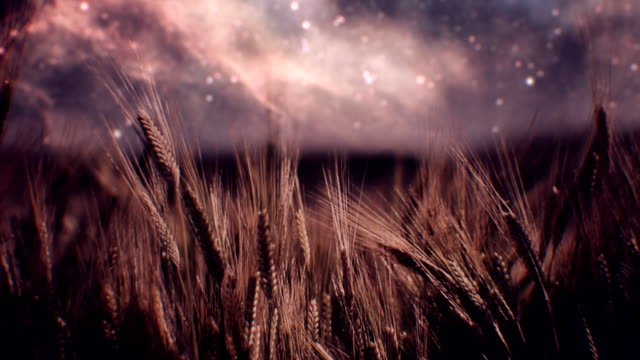 Milky Way Galaxy over field (loopable) video
