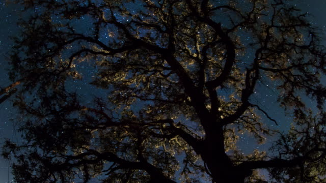 Milky Way Night Sky - Above the Treetop video