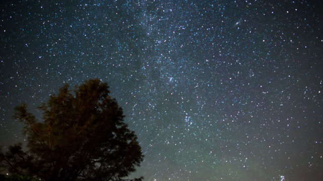 milky way night sky - above the treetops - guardare in su video stock e b–roll