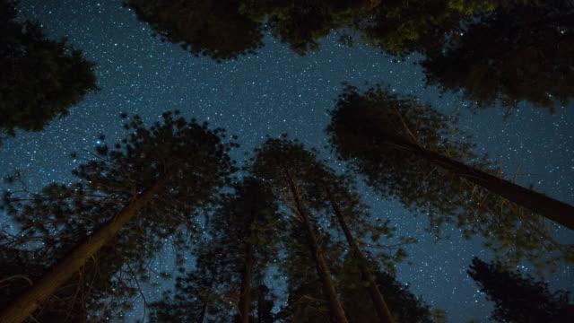 vídeos de stock e filmes b-roll de milky way night sky - above the treetops - céu a noite