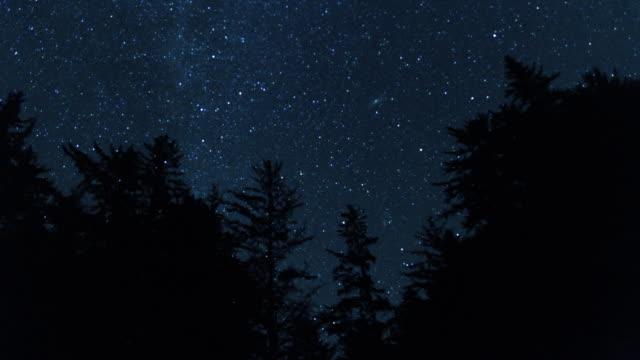 Milky Way Night Sky Above the Treetops