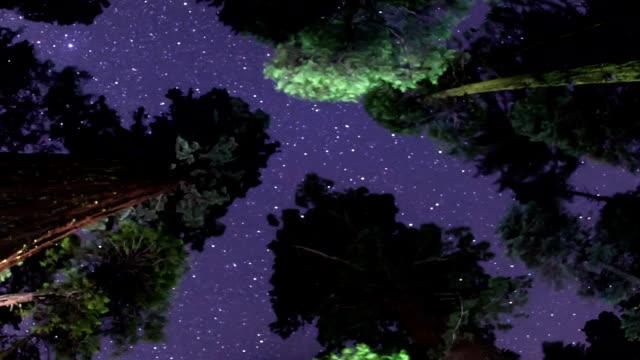 Milky Way Night Sky - Above the Treetops video