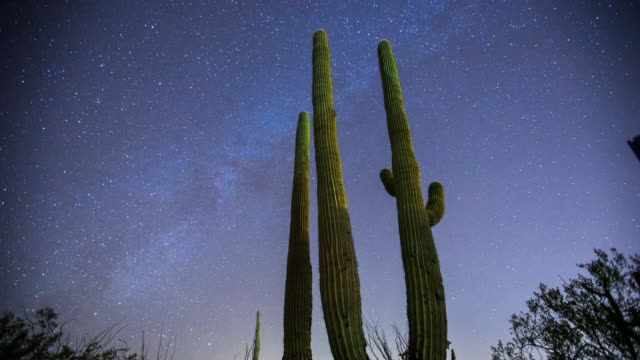 Milky Way Over Desert Cactus Time Lapse video