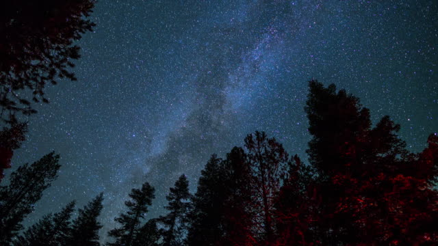 vidéos et rushes de voie lactée au-dessus des arbres - laps de temps - ciel etoile