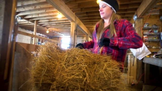 vidéos et rushes de ouvrier de ferme millénaire dans une grange de moutons dans une ferme - foin