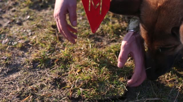 Mine clearance concept with service dogs video