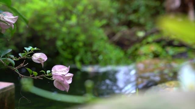 mini garden with waterfall and flowers. lovely landscape. - staw woda stojąca filmów i materiałów b-roll