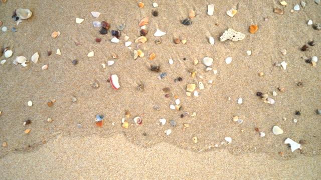 vidéos et rushes de mini coquille sur la vue de dessus de la plage - coquillage