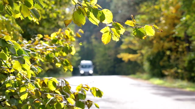 Mini van driving on a road in the autumn forest. Traffic on the forest road in the autumn. Brightly lit leaves in the foreground. vänskap stock videos & royalty-free footage