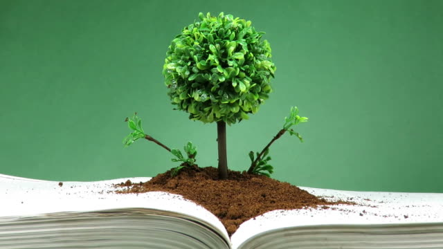 Miniature and decorative tree with round canopy on layer of earth placed on an open book , sprayed with water ,concept about knowledge and spiritual evolution video