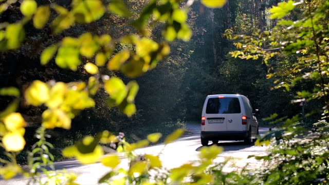 Minivan drives along the forest road. Traffic on the road in the forest. Branches with leaves in the foreground. vänskap stock videos & royalty-free footage