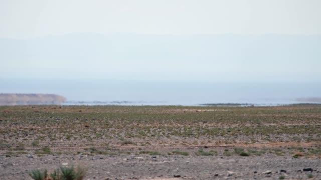 モンゴルの乾燥した石の砂漠で蜃気楼。水湖オアシスの地平線上の目の錯覚。西モンゴル ビデオ