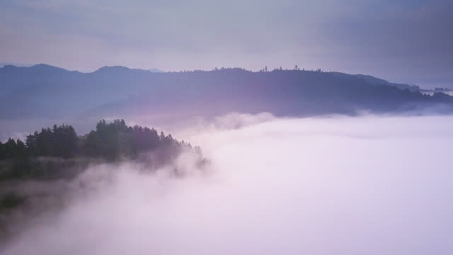 Mist Around Coastal Redwood Forest- Aerial Shot video