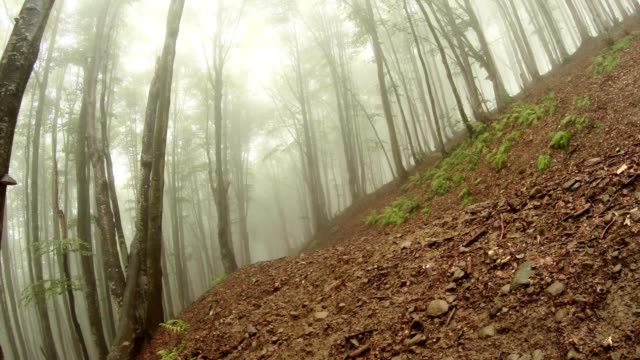 Mist Down on The Mountainside Covered With Trees video