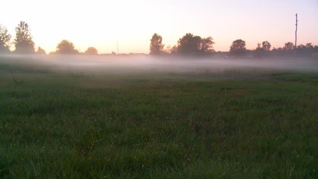 hd time lapse: туман двигаться через луг - four seasons стоковые видео и кадры b-roll