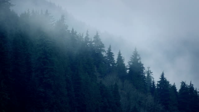 Mist Moving Over Trees In The Wild video