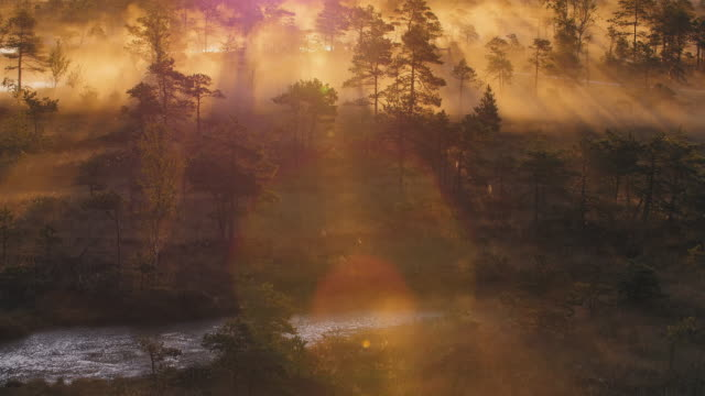 Mist rising from a wetland forest video