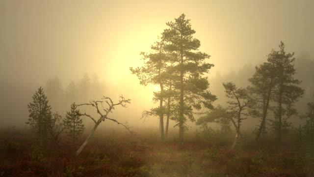 dimma stiger från mossen. dimmigt träsk tidigt på morgonen före soluppgången. - pine forest sweden bildbanksvideor och videomaterial från bakom kulisserna