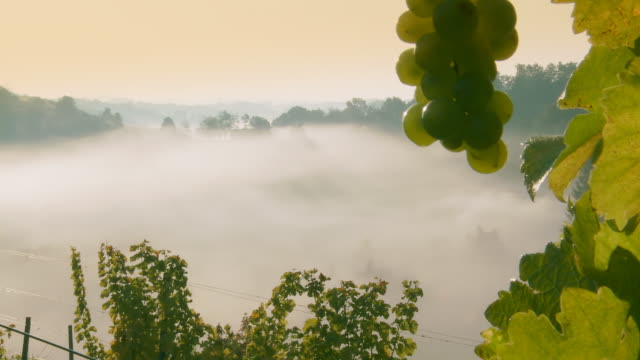 HD TIME-LAPSE: Mist Rising Out Of The Vineyard Valley video