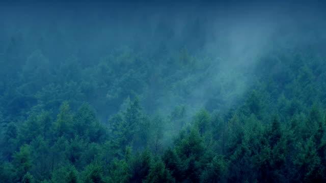 nebbia che rotola sulla foresta la sera - monti appalachi video stock e b–roll