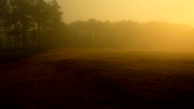 Misty at forest pine tree video