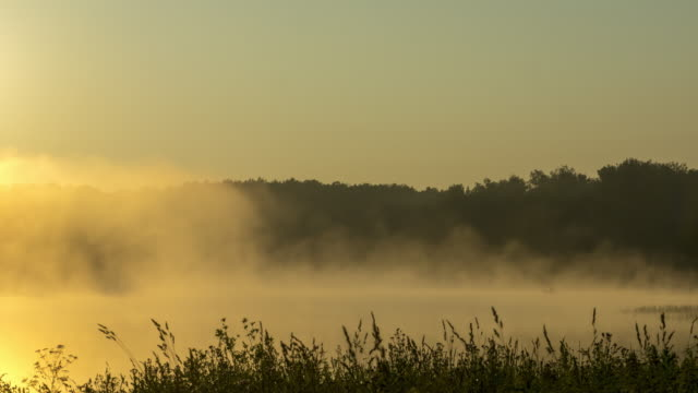 misty early morning at forest lake - trees in mist stock videos & royalty-free footage