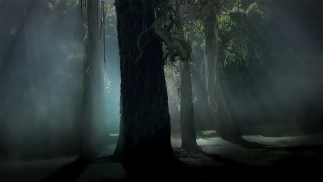 misty forest 2 - hd720, ntsc, pal - trees in mist stock videos & royalty-free footage