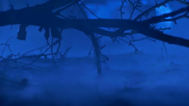 hd: misty forest by moonlight - intoning bildbanksvideor och videomaterial från bakom kulisserna