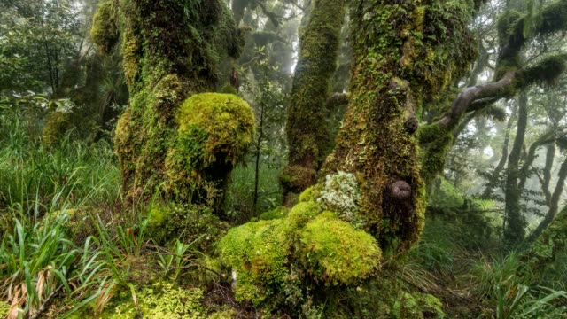 Misty forest park in green wilderness landscape in pure New Zealand nature