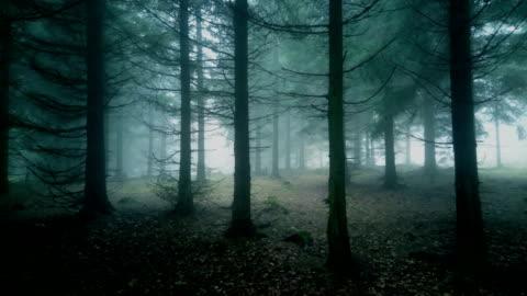 vídeos de stock e filmes b-roll de misty forest. - floresta