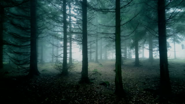 misty forest. - trees in mist stock videos & royalty-free footage
