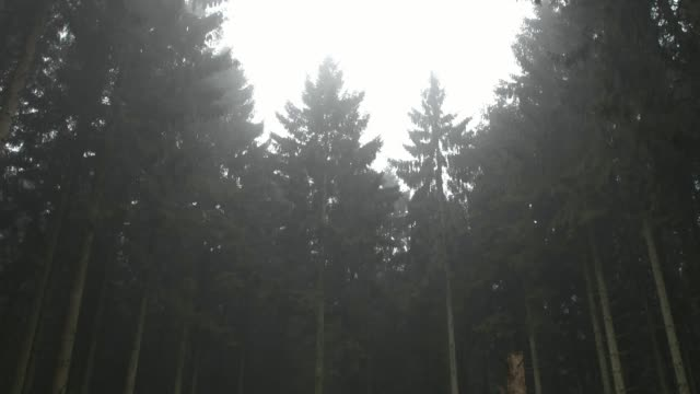 misty forest - tilt down stock videos & royalty-free footage