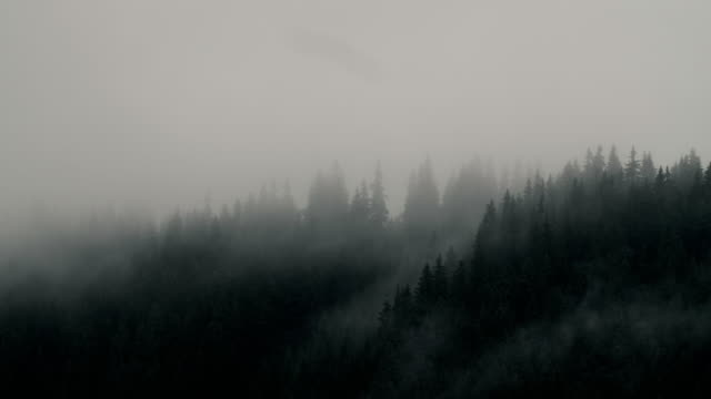 Misty mood, moving clouds over pine forest trees near a lake. Misty mood, moving clouds over pine forest trees near a lake. mountains in mist stock videos & royalty-free footage