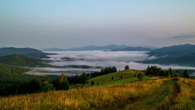 misty morning i bergen - städsegrön växt bildbanksvideor och videomaterial från bakom kulisserna