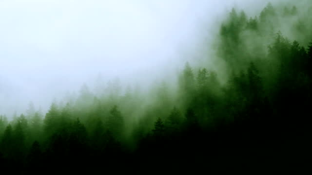 foresta di montagna nebbioso - nebbia video stock e b–roll