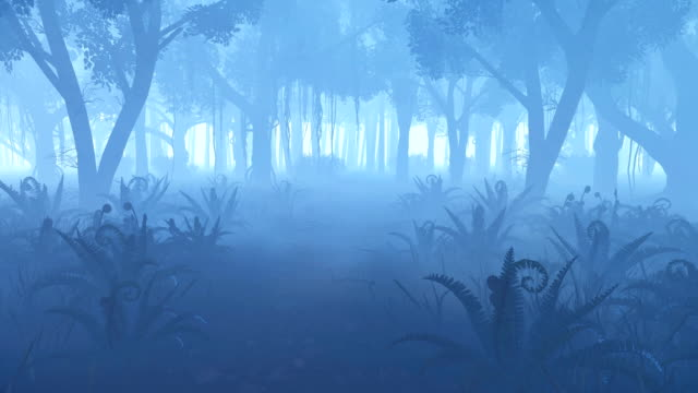 Misty night forest with fern thickets video