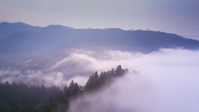 Misty Redwood Forest - Aerial Shot video