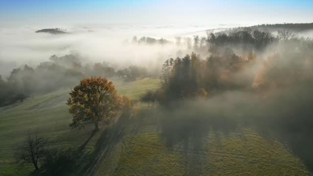 misty rural landscape, aerial footage - obszar zadrzewiony filmów i materiałów b-roll