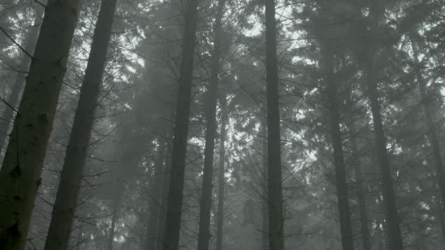 misty woods - tilt down stock videos & royalty-free footage