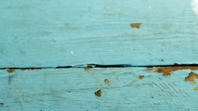 Mix peppercorns in wooden spoon 4k video