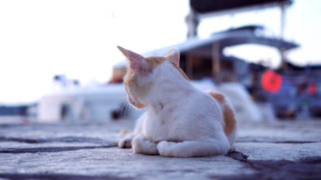 Gemischt-Rasse-Katze Festlegung auf Betonboden – Video