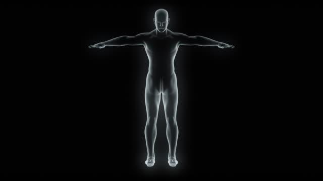 model of x-ray male body - tułów filmów i materiałów b-roll