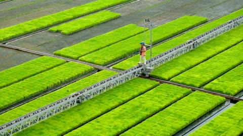 innovazione agricola moderna sistema automatico sprinkler spruzzare acqua per germogliare albero. fattoria moderna. spruzzare automaticamente acqua sul terreno del cortile. agricoltore intelligente che utilizza la tecnologia per aumentare la produttività - agricoltura video stock e b–roll