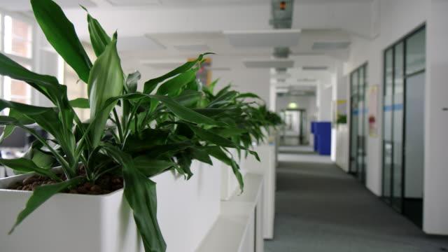 vídeos y material grabado en eventos de stock de espacio moderno de oficina de negocios con plantas - cube