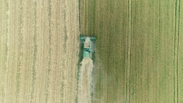 modern buğday mahsulü üzerinde çalışan hasat birleştirmek. havadan görünüm. - doğal koşul stok videoları ve detay görüntü çekimi